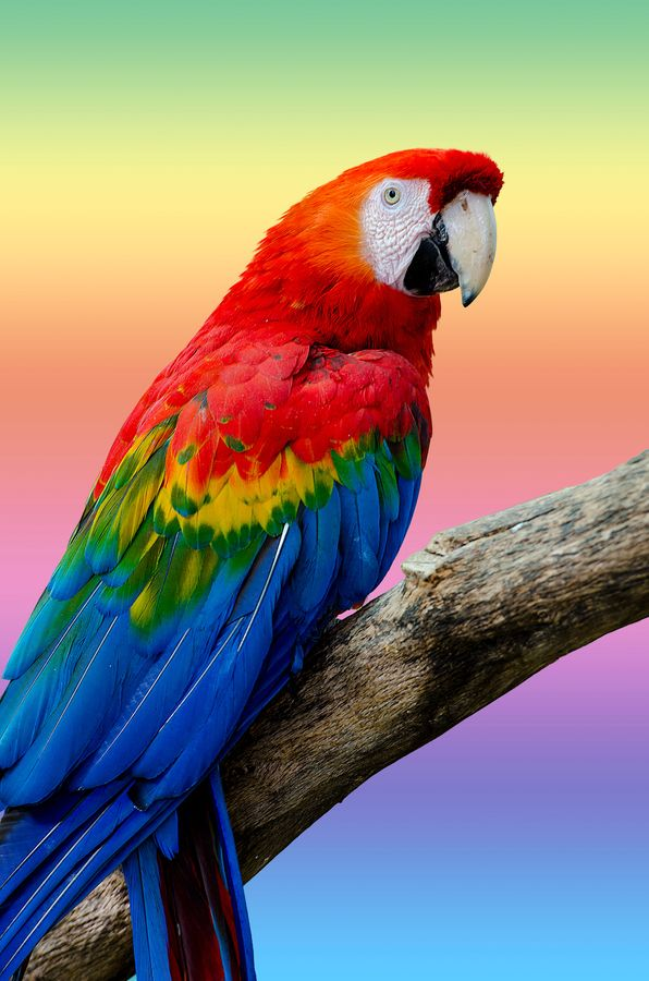 Parrot's colors reflected in background.