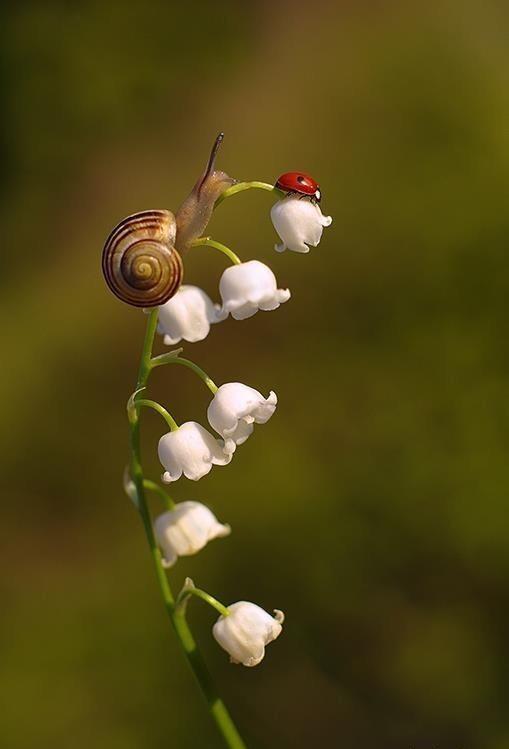 Snail and ladybird