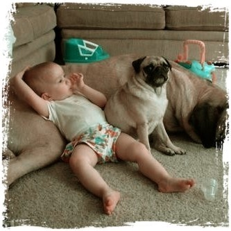 like this? Share with friends: Animals, Dogs, Sweet, Pets, Funny, Kids, Baby, Friend