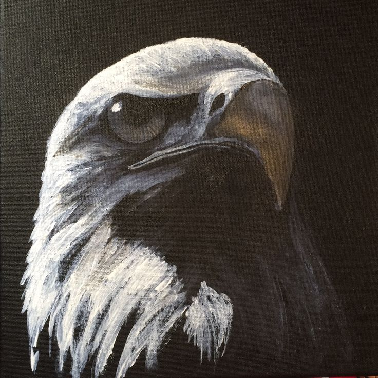 Bald eagle acrylic on canvas First one