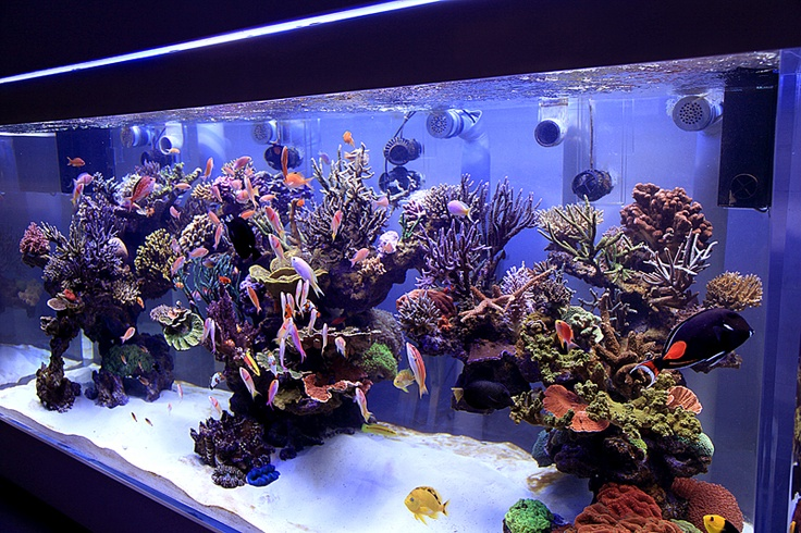 DSPS tank from Thailand (1000 gallon+)