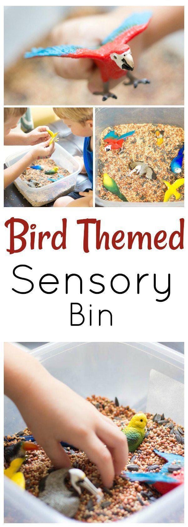 Teach your preschoolers about backyard birds with this sensory bin.