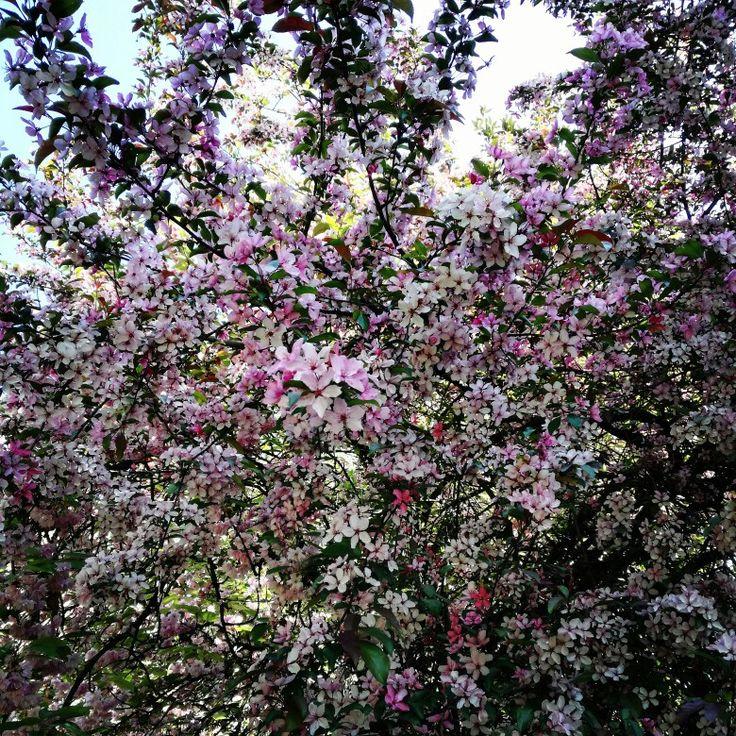 Una settimana all'anno la natura ci fa questo prezioso regalo... #nature #flowers #pink #colors #springtime #cortefinzi #bedandbreakfast