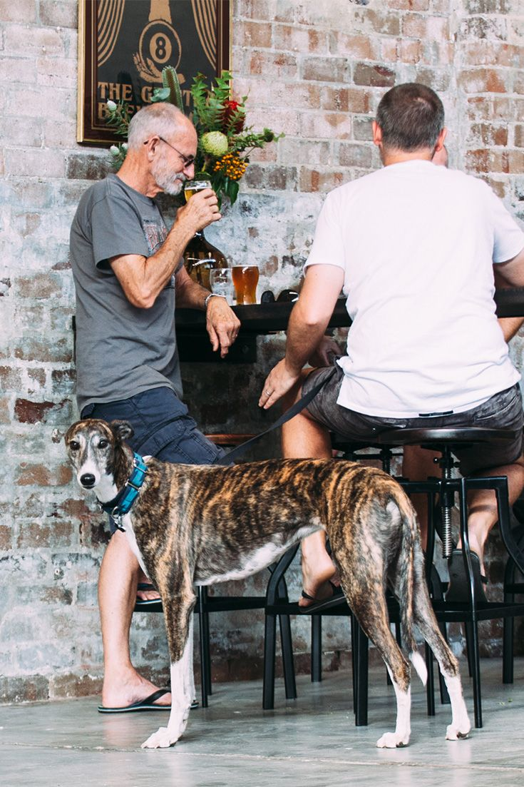 These guys are open Fridays through Sundays with a strong pro-dog, pro-kids, pro-snacks agenda.