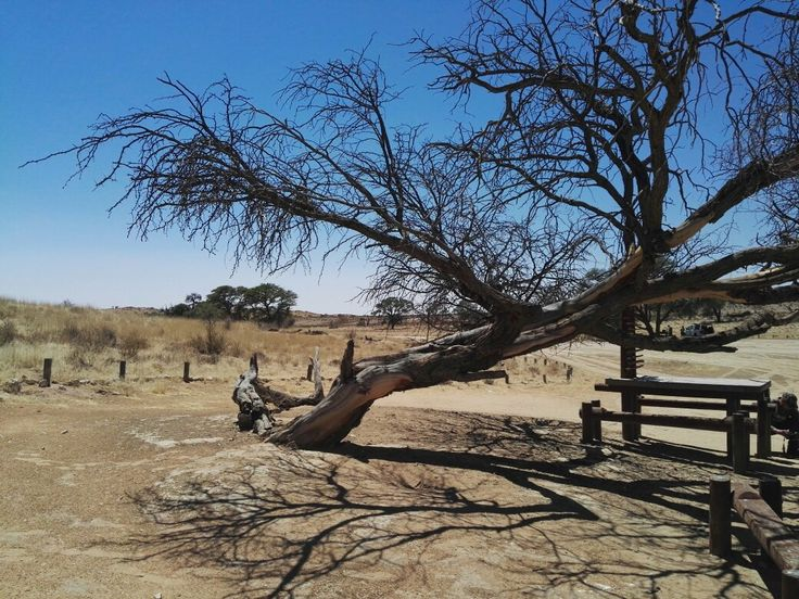 South Africa, Kgalagadi Transfrontier Park