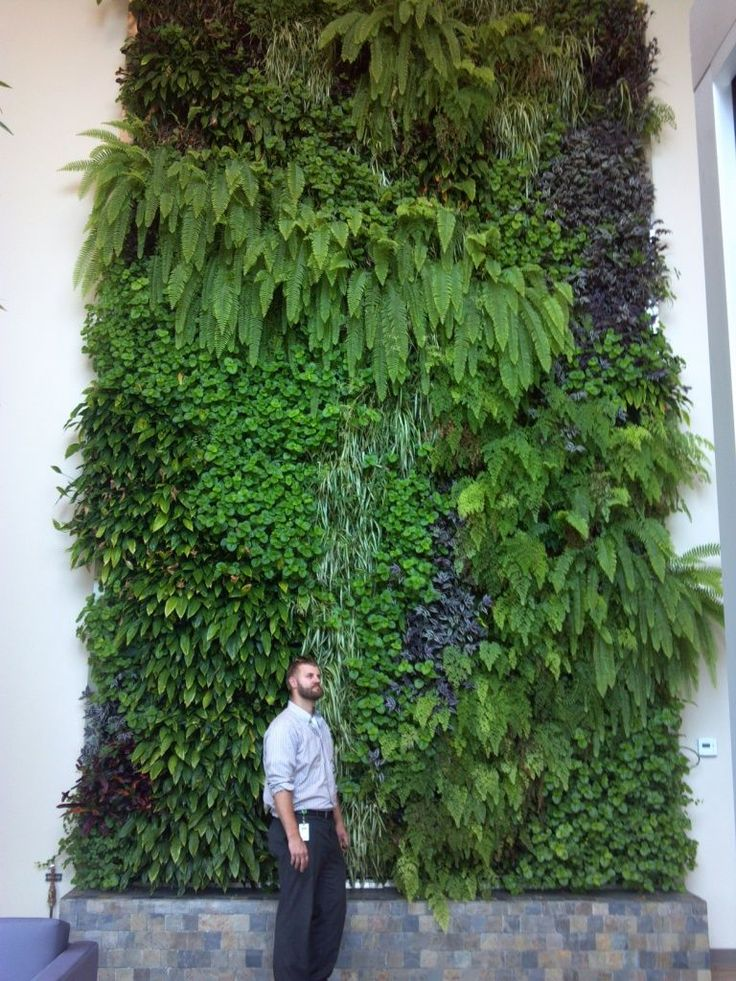 668 best paredes verdes jardim vertical green wall for Green wall advantages