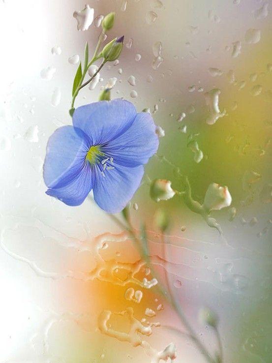 60 fotografías de las flores más hermosas del mundo | Banco de ...