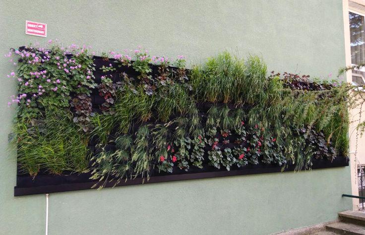 Ogród wertykalny w Lublinie. #verticalgarden #greenwall #outdoor