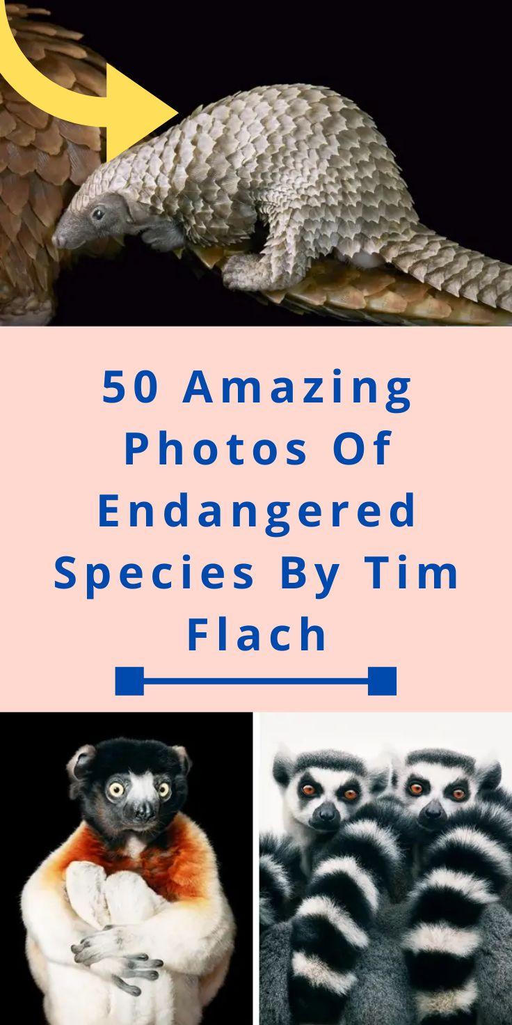Man travels the world, photographs endangered animals that