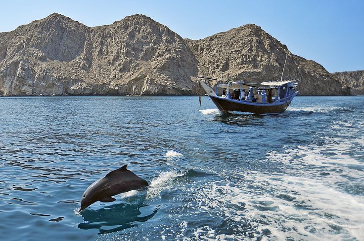 Fancy sailing with the Dolphins in Khasab, Oman? STAR PRICE United Arab Emirates sailing from ONLY £349pp with ‪#‎MSCCruises‬ - PLUS up to £250pp FREE on-board spend on Ex-Dubai sailings*(T&Cs apply) (12th December 2015, MSC Musica, Dubai)