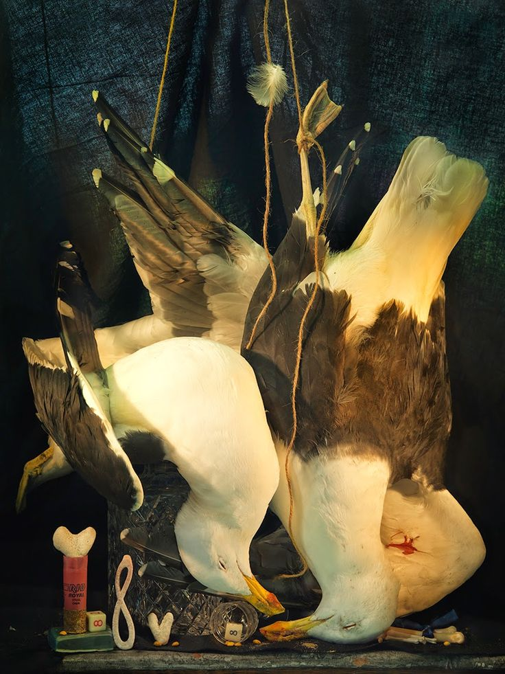 Fiona Pardington, Still Life with Two Dead Gulls, Coral Hearts and Lemniscate, Ripiro Beach 2014