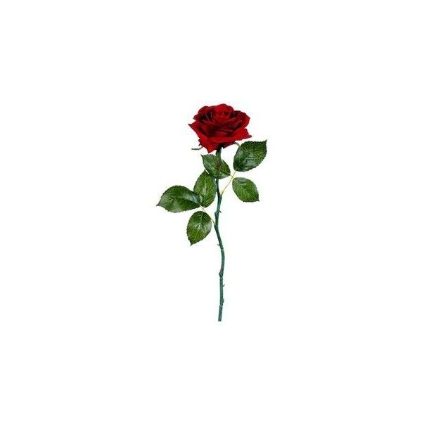 """Velvet Open Rose in Red 17.5"""" Tall ❤ liked on Polyvore featuring accessories and flowers"""