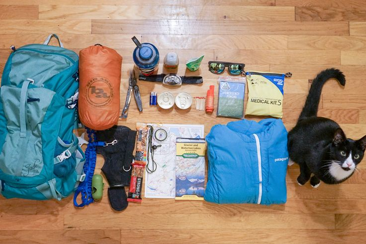 14 essentials for hiking and camping with a cat
