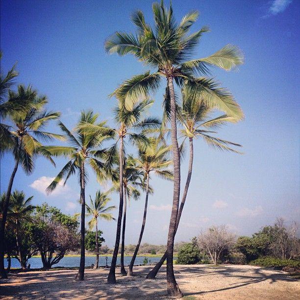 Kona, Hawaii in Kailua, HI