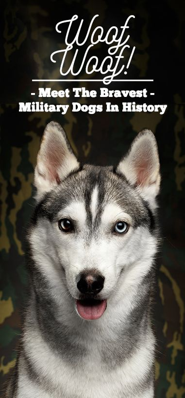 Do you know the bravest military dogs in history?