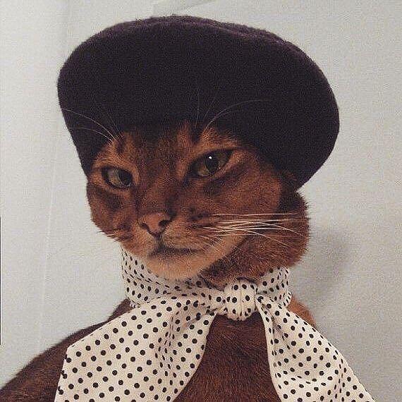 Velvet Dynasty Instagram: Samstag Stimmung #velvetdynasty Katzen Haustiere niedlich   – Cats