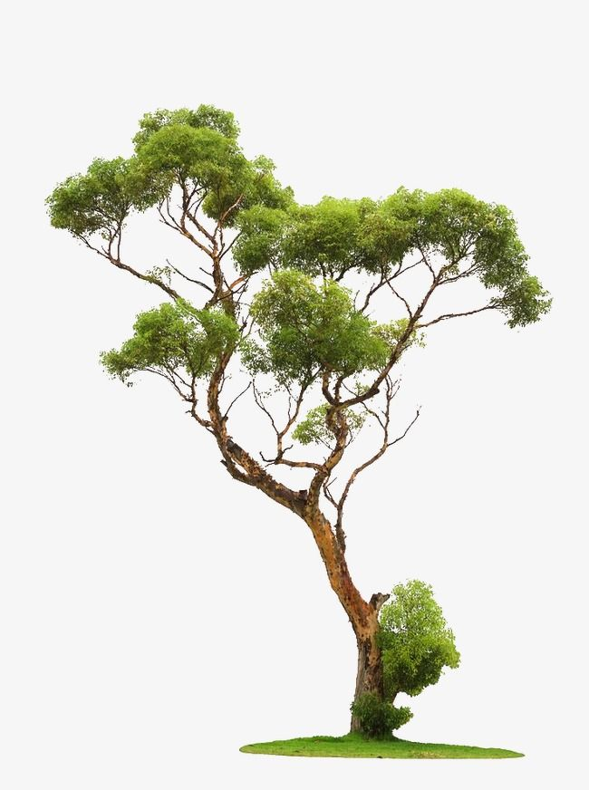 Trees, Branches PNG Transparent Image and Clipart for Free Download
