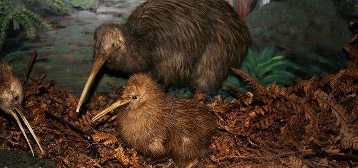 Otorohanga Kiwi House & Native Bird Park