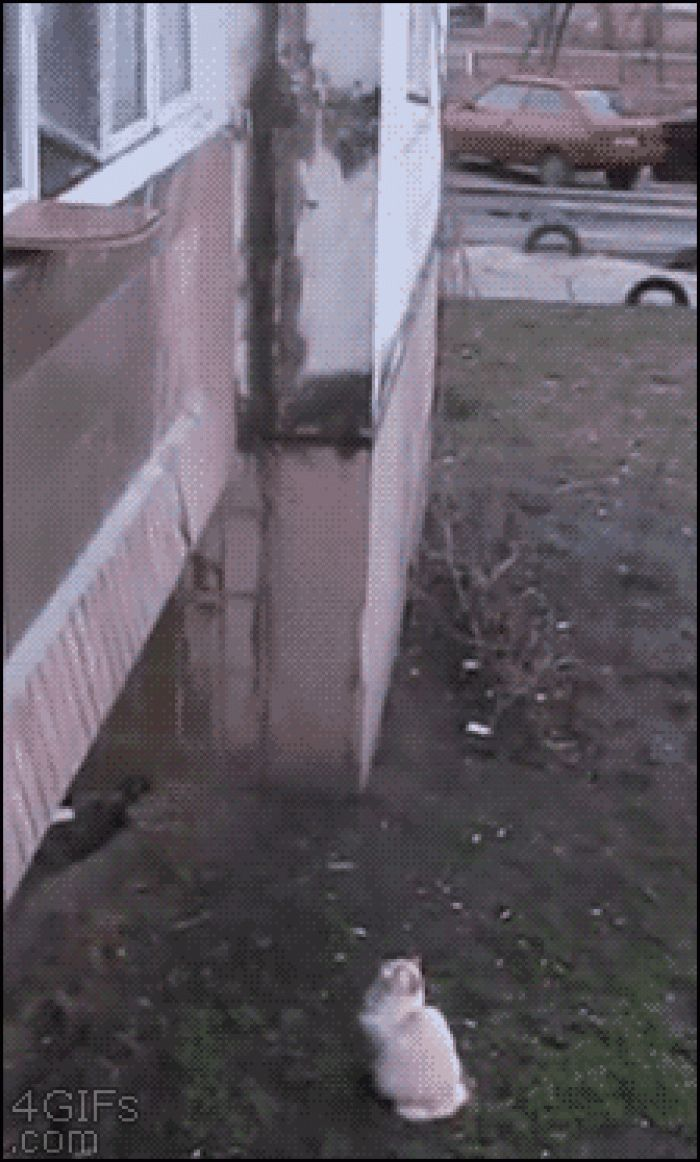 A cat climbs up a sheet hanging out of the window like Rapunzel climbing hair :)