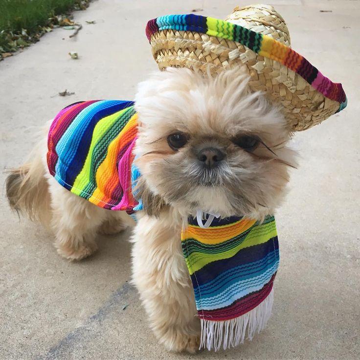 Inspiration & Accessories: DIY Mexican Dog Halloween Costume Idea
