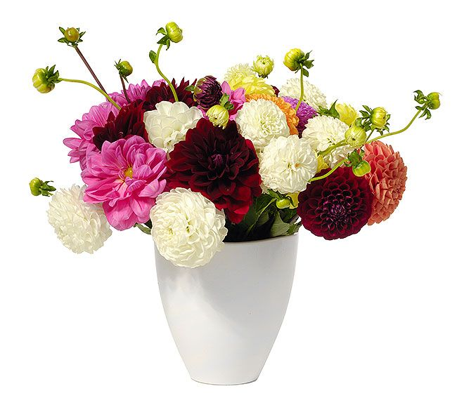 http://www.gamerenders.com/forum/member.php?u=118843  Cheap Flowers,  Flowerwyz,Flower Wyz,Flowerwyz Flower Delivery,Flower Delivery,Flowers Online,Send Flowers,Flowers Delivery,Cheap Flowers,Cheap Flower Delivery,Online Flowers,Sending Flowers  When you contrast blossom shipment business, a few of the crucial elements to consider are the costs, shipment charges, shipping locations, and also message service.