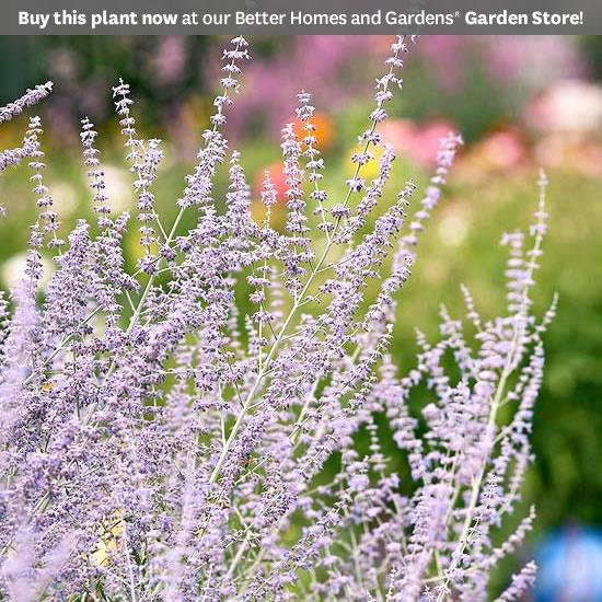 Top 20 Perennials for your garden.