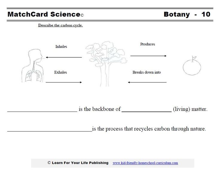 best homeschool science images carbon cycle  carbon cycle essay pictures water carbon and nitrogen cycle worksheet toribeedesign