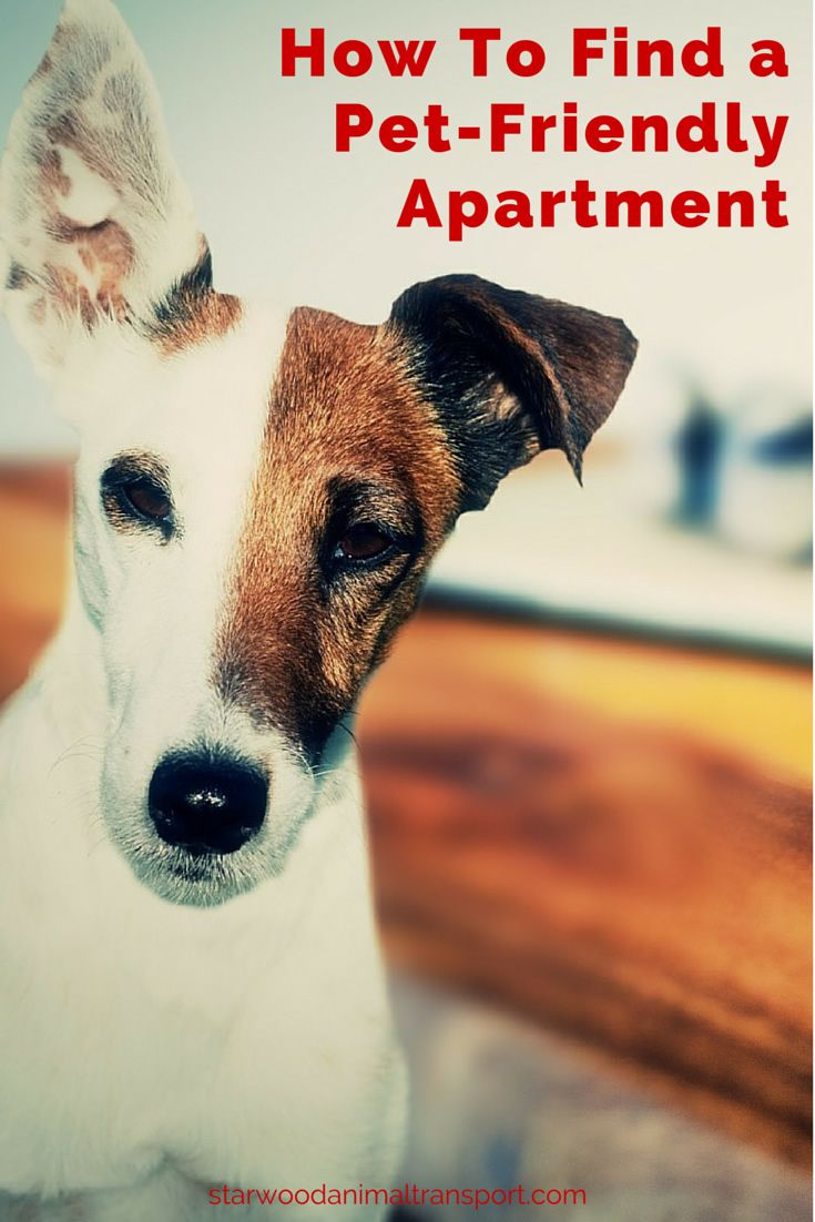 Moving a Pet -Tips for Finding a Pet-Friendly Apartment http://www.starwoodanimaltransport.com/moving-a-pet-tips-for-finding-a-pet-friendly-apartment