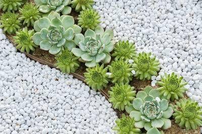 Weiße Kieselsteine im Garten