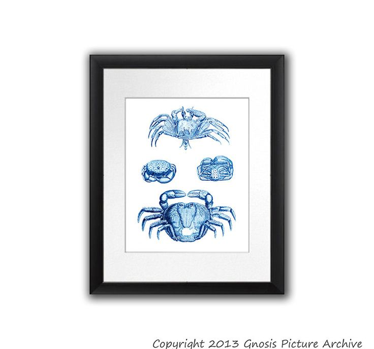 Coastal Decor Blue Crab Art Print no.2 Crab Decor vintage illustration Ocean life Beach House Decor Bathroom Decor 8x10 print Gnosis Picture by GnosisPictureArchive on Etsy