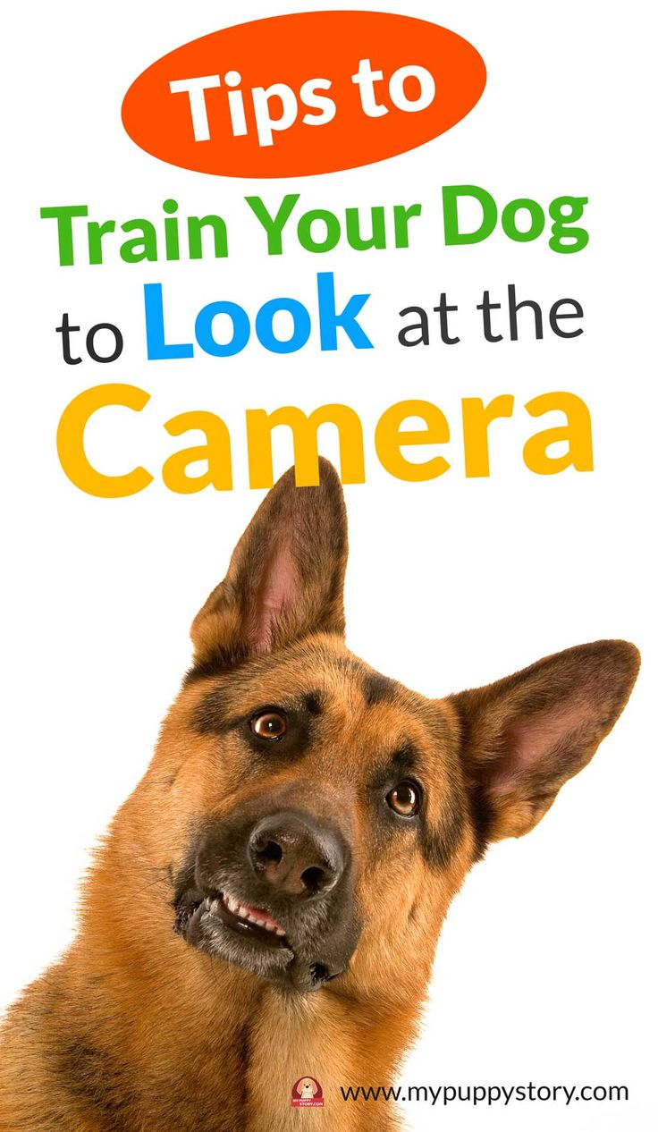 How to Train Your Dog to Look at the Camera - My Puppy Story
