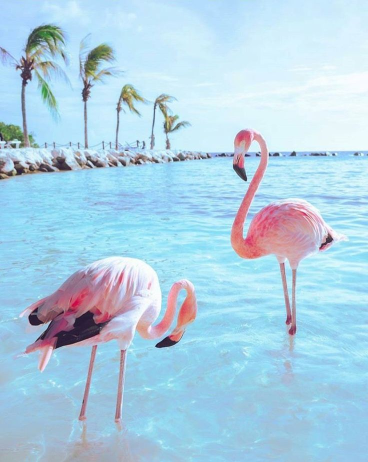 Flamingo Beach Pink Flamingos Chill Lounge Sunset