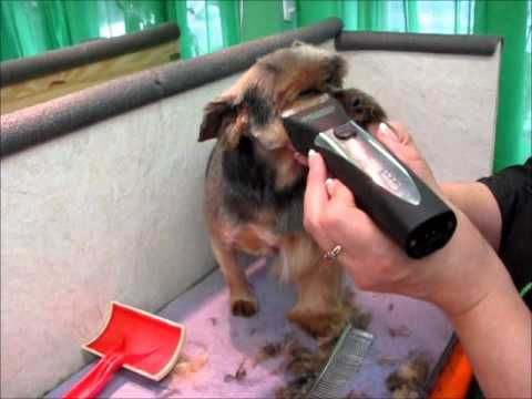 Grooming without Scissors VI - YouTube