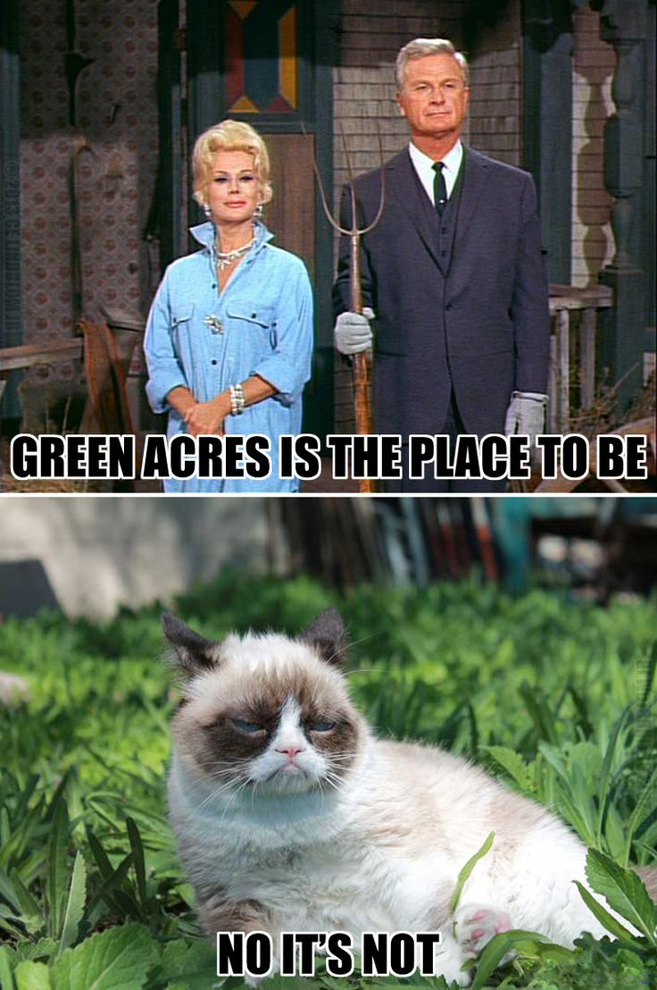Green Acres is the place to be. No it's not. Grumpy Cat ...