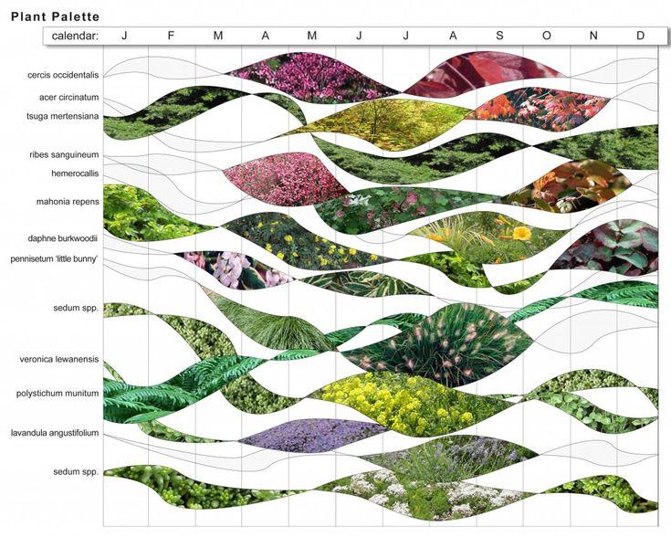 Plant Palette for roof garden