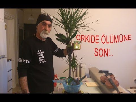 KARBONAT İLE ORKİDE BAKIMI (CARBONATE OR ORCHID CARE)!!!! – YouTube