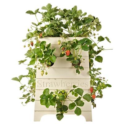 Beehive Strawberry Planter