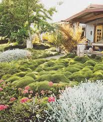 Korean Velvet Grass (Zoysia tenuifolia) blanketing a front yard.