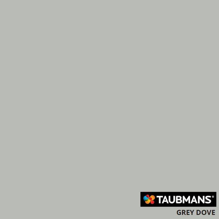 #Taubmanscolour #greydove