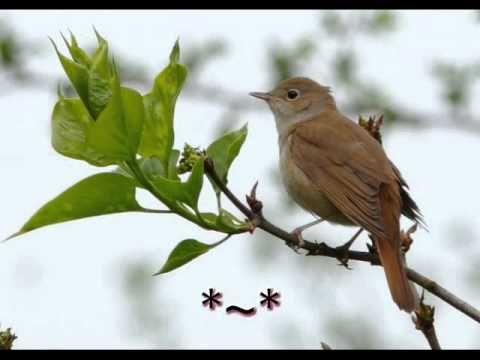 nightingale - norah jones