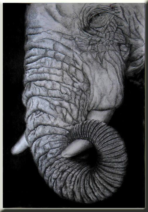 Sleeping elephant, 600x450mm, charcoal on 300gsm paper. Drawn by Susan Brett