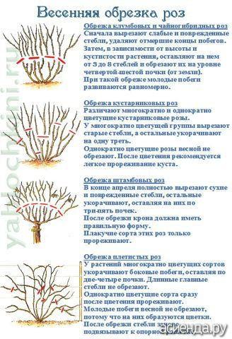 Обрезка - 3. Ухаживаем за прекрасным. Розы любимые.: Группа Плодовые деревья и кустарники