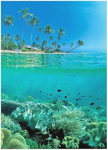 Southeast Sulawesi - Wakatobi - Zwemmen, snorkelen of duiken in een onderwater paradijs dat nog niet zo bekend is bij het grote publiek en het grootste aantal riffen en vissoorten ter wereld heeft.