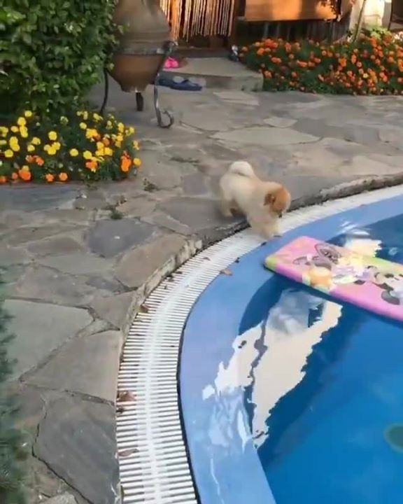 Here is a surfing video from mee! 😃  By: @shila_the_pom #StupidPrices