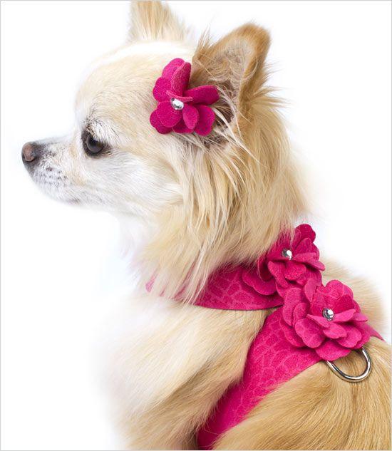 Garden Tinkie Dog Harness