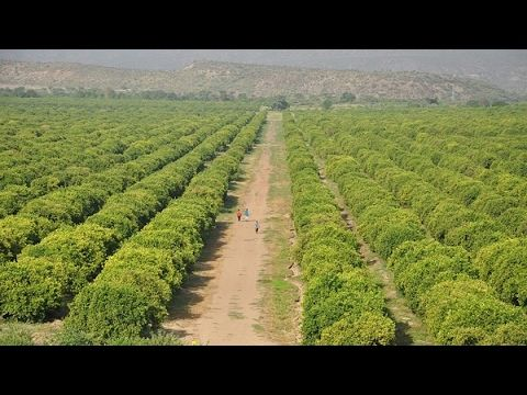 Ethiopia ― Green Journey: Ethiopia's Revolution on Its Agricultural Sector