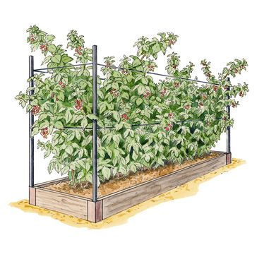 Raspberry Bed and about 12 raspberry canes to start with. Plan to plant along fence line on left back corner of yard.
