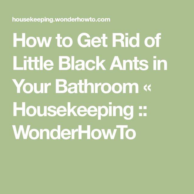 How to Get Rid of Little Black Ants in Your Bathroom « Housekeeping :: WonderHowTo