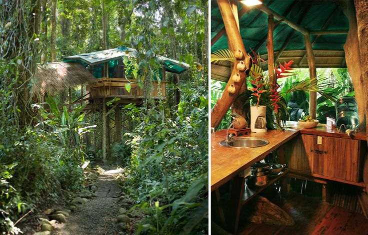 25 best images about treehouses on pinterest trees a for Jungle house costa rica