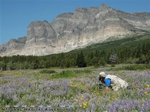 """When naturalist John Muir visited Glacier, he wrote in 1901, """"Get off the tracks at Belton Station [now West Glacier] and in a few minutes you will find yourself in the midst of what you are sure to say is the best care-killing scenery on the continent."""""""
